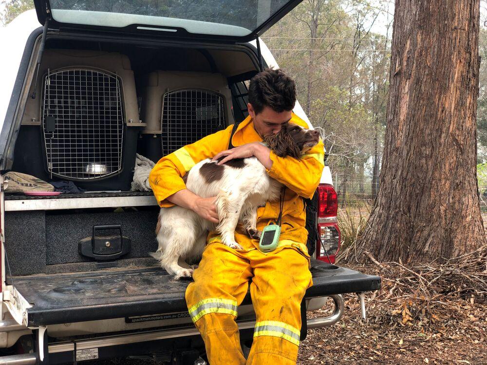 Trener Ryan Tate z psem Taylorem, który pomaga zlokalizować koale ranne w pożarach w Australii.