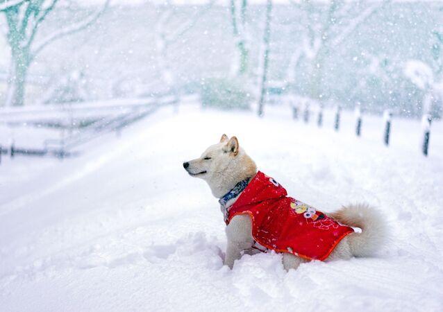 Pies w ciepłej kamizelce