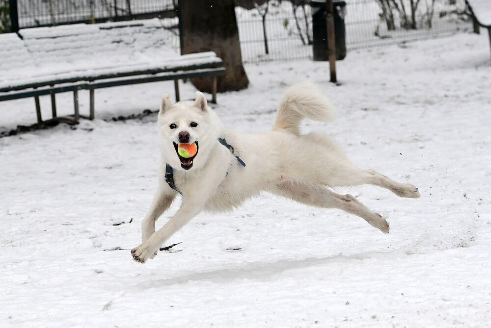 Pies skacze za piłką