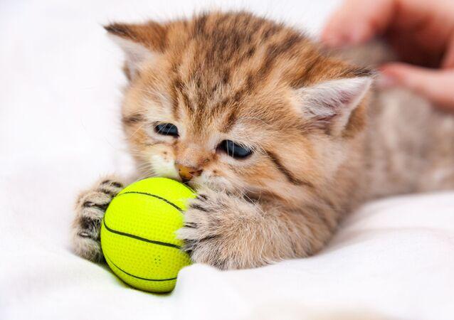 Kociak z piłeczką