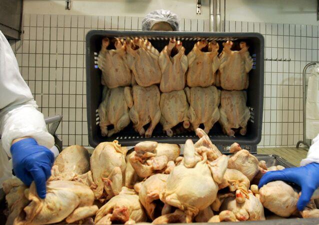 Pracownicy w zakładzie produkującym mięso