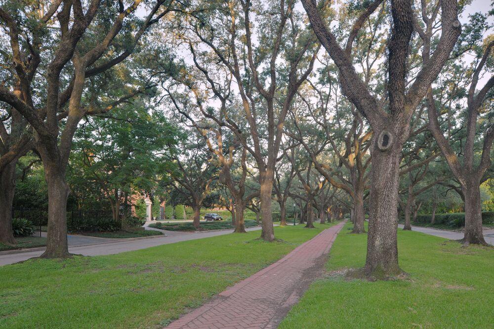 Aleje dębowe Broadacres, które jest częścią miasta Houston w Teksasie