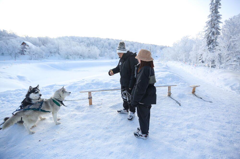 """Psy rasy husky w parku turystyki """"Zorza polarna"""""""