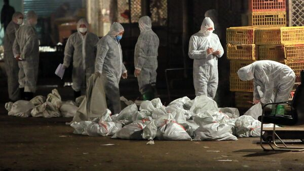 Epidemia ptasiej grypy w Chinach. - Sputnik Polska