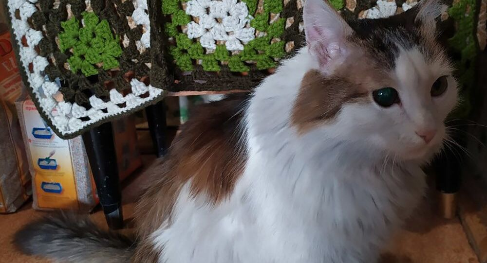 Kot Liosza