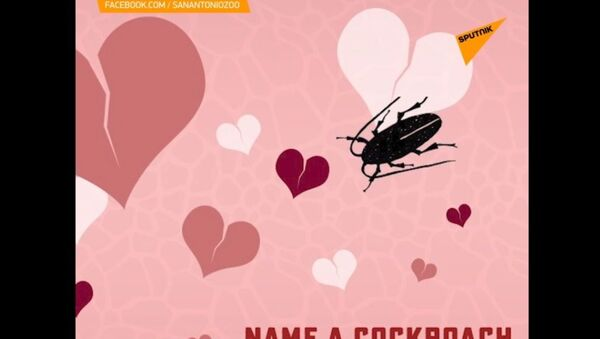 Nazwij karalucha na cześć swojego byłego partnera  - Sputnik Polska