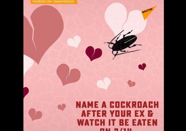 Nazwij karalucha na cześć swojego byłego partnera