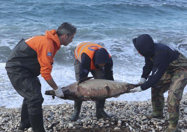 Martwy delfin