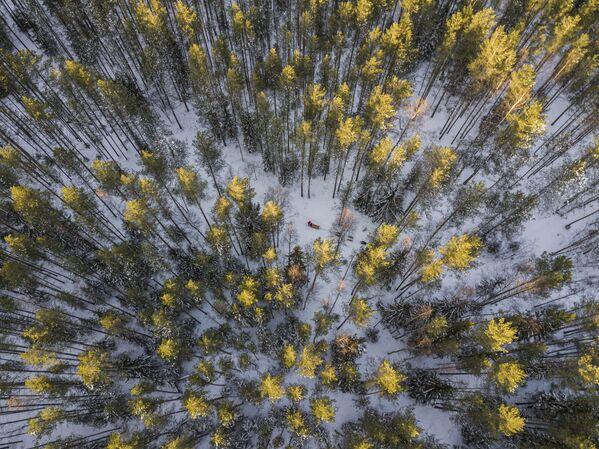 Lasy Karelii - Sputnik Polska