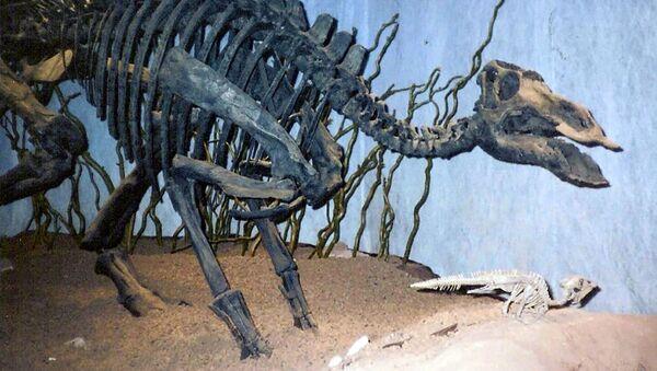 Maiasaura, rodzaj dinozaura z rodziny hadrozaurów. - Sputnik Polska