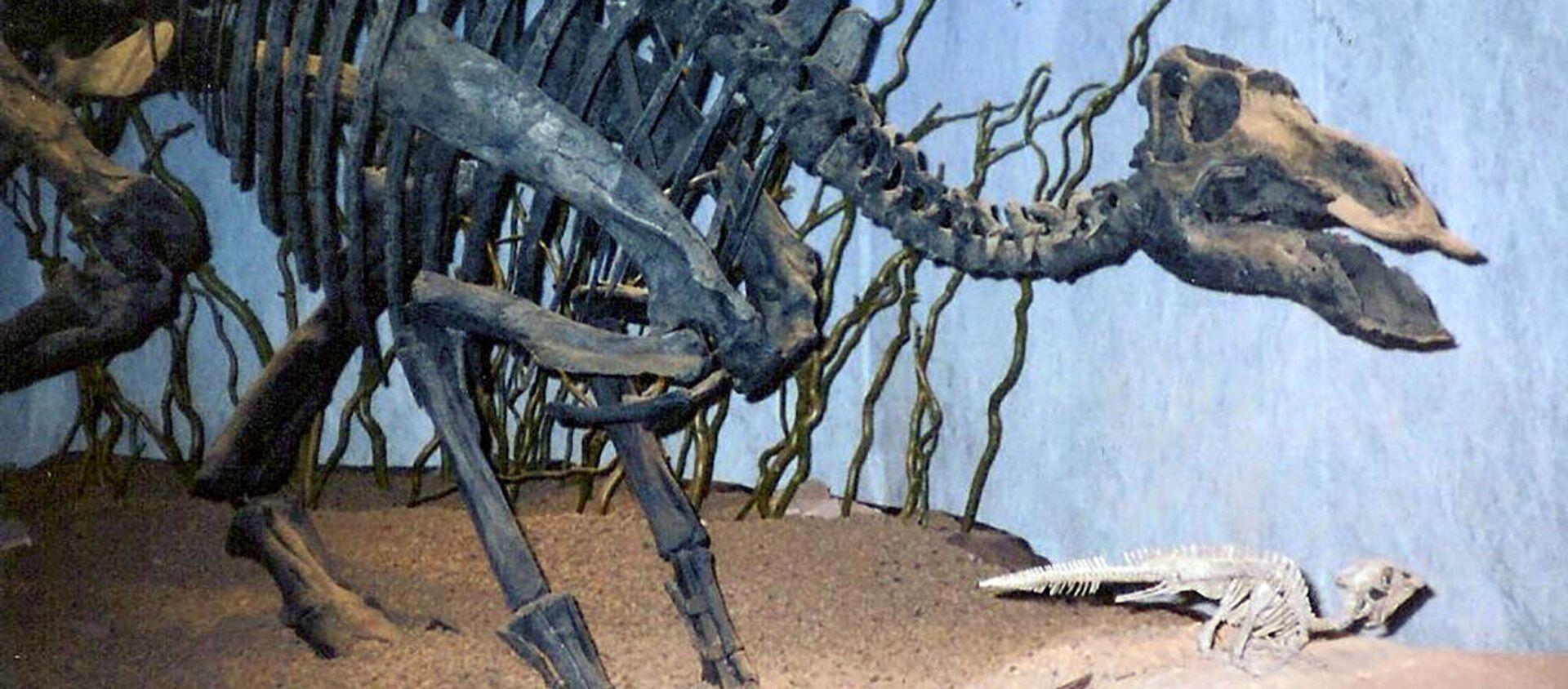 Maiasaura, rodzaj dinozaura z rodziny hadrozaurów. - Sputnik Polska, 1920, 19.02.2020
