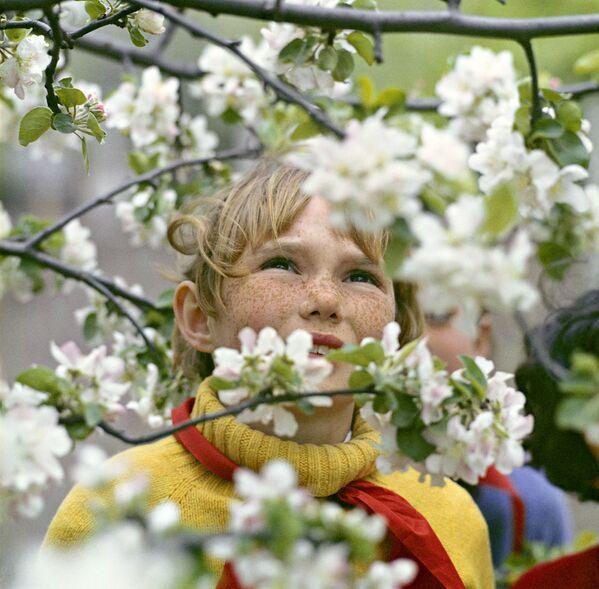 Uczennica wśród kwitnących drzew, Ukraińska Socjalistyczna Republika Radziecka 1972 rok  - Sputnik Polska