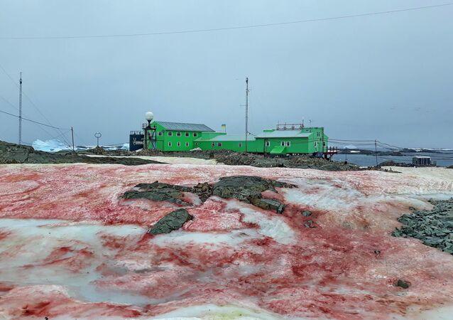 """Czerwony śnieg na ukraińskiej stacji antarktycznej """"Akademik Wiernadski"""""""