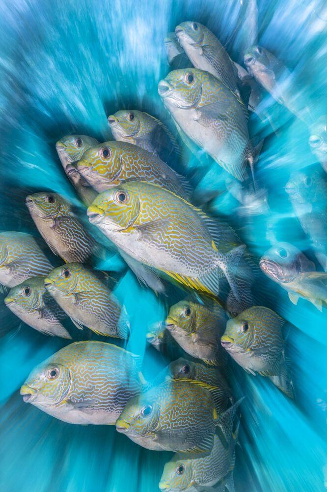 Zdjęcie Rabbit Fish Zoom Blur brytyjskiego fotografa Nicholas More