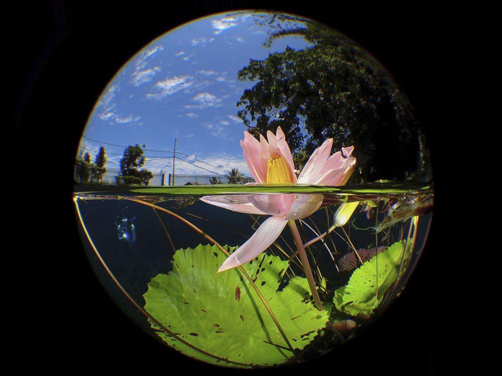 Zdjęcie Uluna Lily fotografa Manbd z Malezji