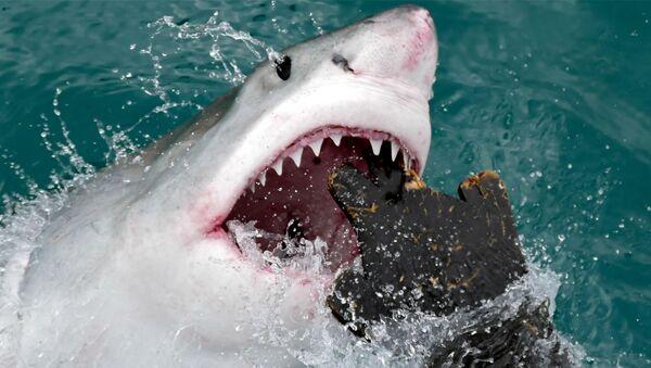 Atak rekina - Sputnik Polska
