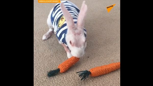 Łysy królik stał się ulubieńcem rodziny - Sputnik Polska