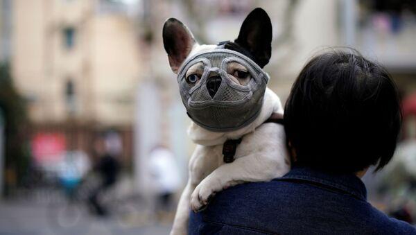 Pies w masce ochronnej, Szanghaj - Sputnik Polska