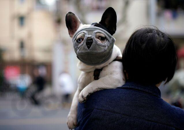 Pies w masce ochronnej, Szanghaj