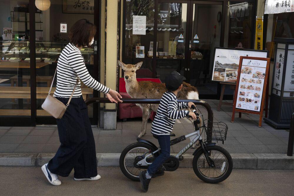 Sarna przy sklepie w Nara, Japonia