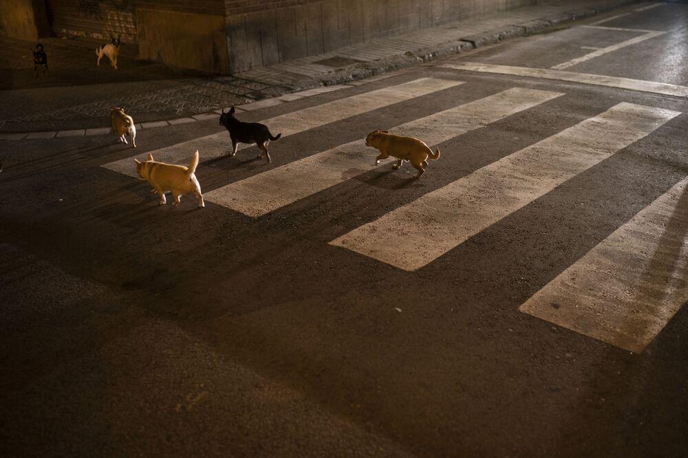 Stado psów na ulicy w Barcelonie