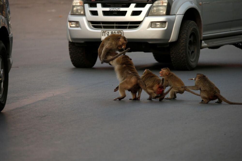Małpy przy samochodzie w Tajlandii