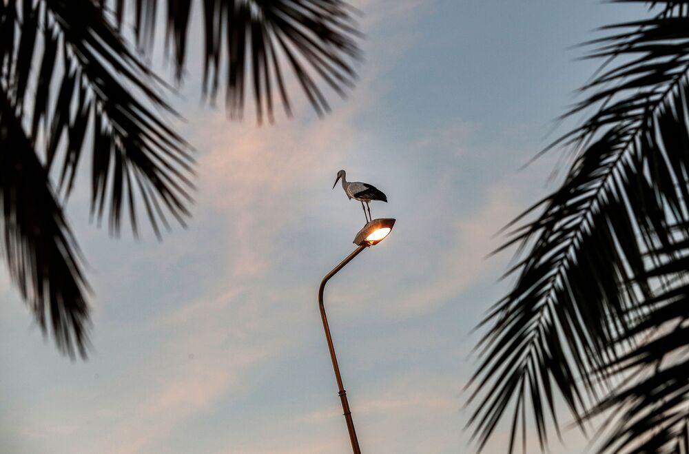 Bocian na latarni na brzegu rzeki Jordan
