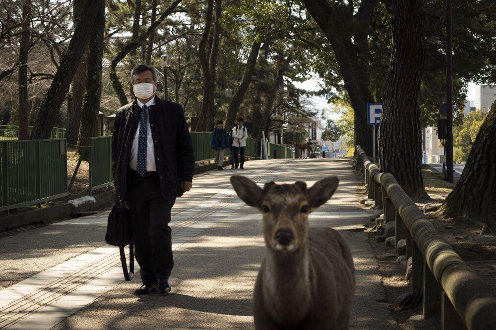 Piesi i sarny na ulicy miasta Nara
