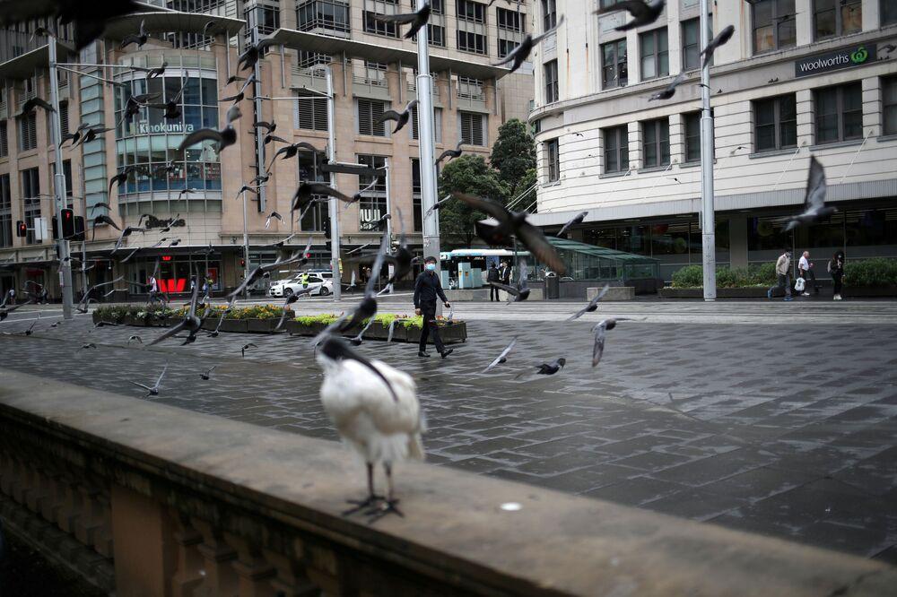 Ptaki na opuszczonej ulicy w Sydney