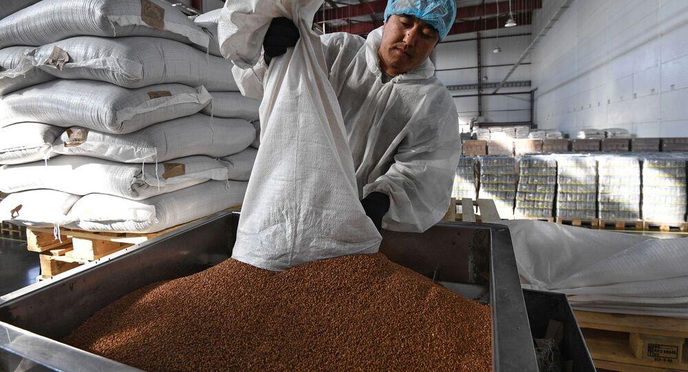 Linia pakująca kaszę gryczaną w fabryce pod Nowosybirskiem