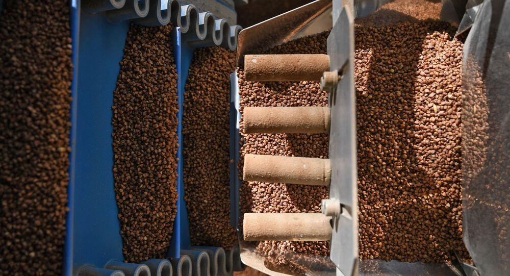 Linia produkcyjna kaszy gryczanej w fabryce pod Nowosybirskiem