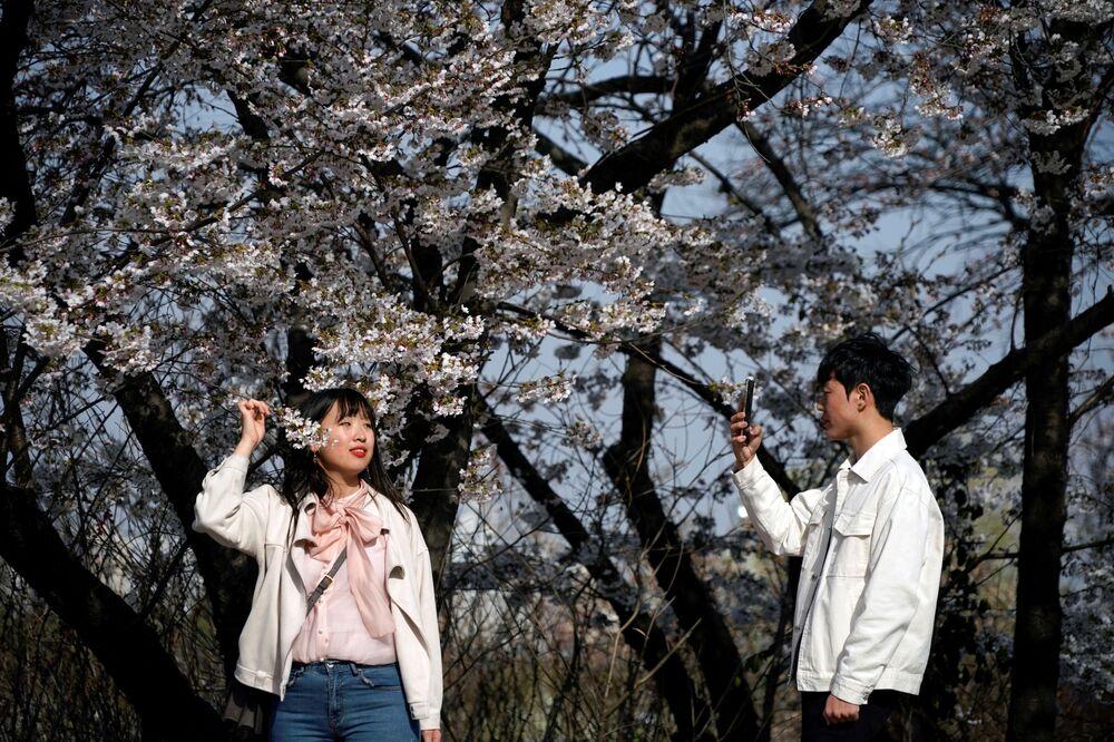 Kwitnienie japońskiej wiśni w Seulu