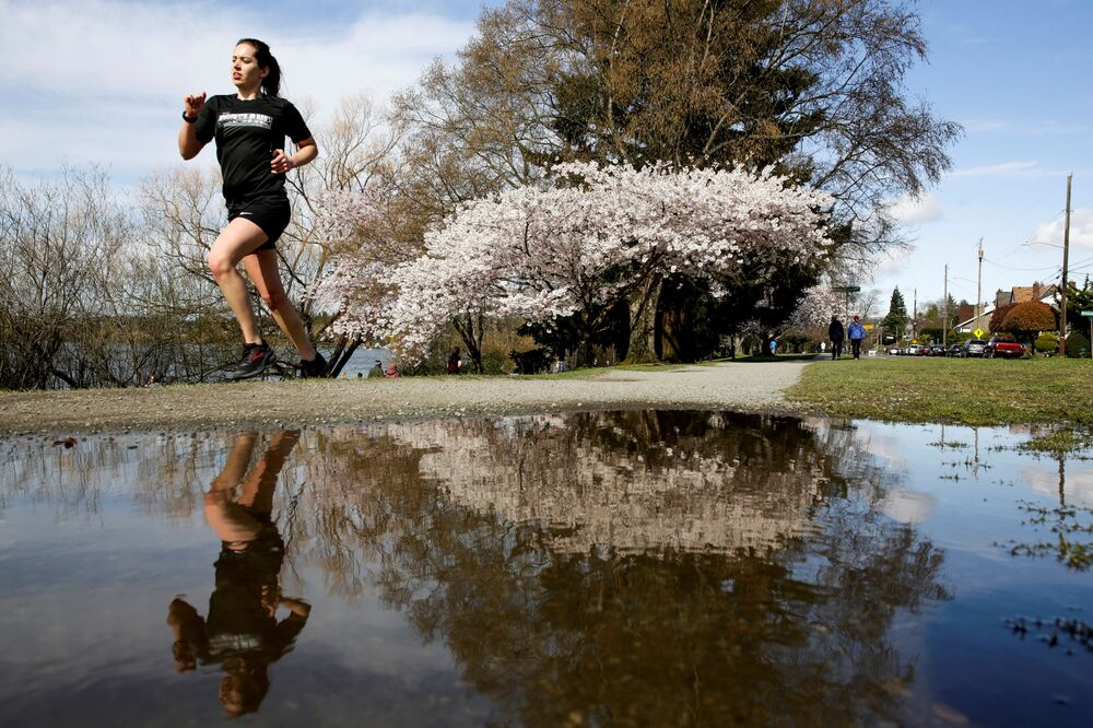 Kwitnienie japońskiej wiśni w Waszyngtonie