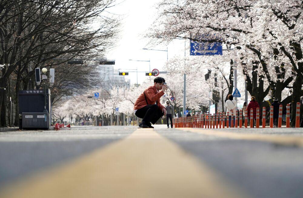 Kwitnienie sakury w Seulu