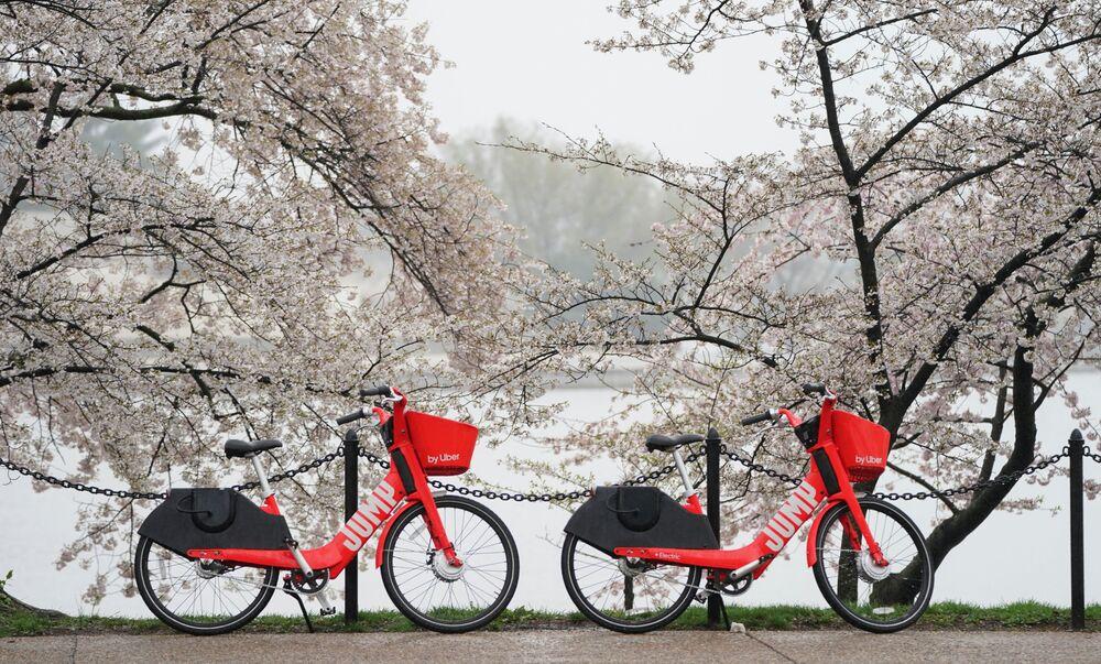 Kwitnienie sakury w Waszyngtonie