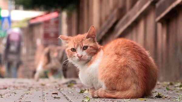 Koty w Bejrucie - Sputnik Polska