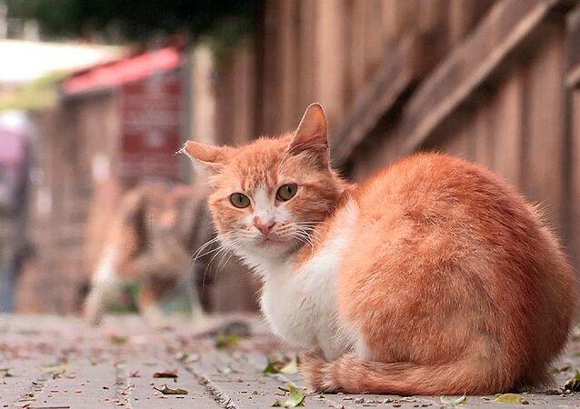 Koty w Bejrucie