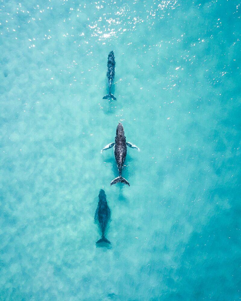 """Spotting these 3 cruising up the coast made my day"", Australia"