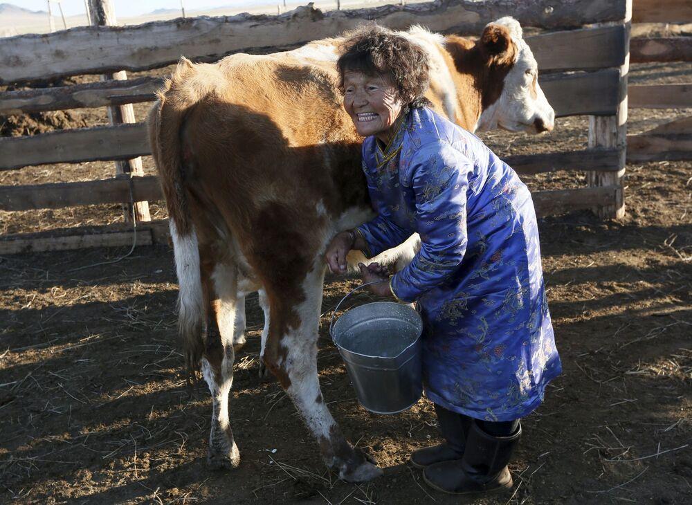 Tuwińska kobieta Sendin Ondar doi krowę na wsi Kur-Czer w republice Tuwa