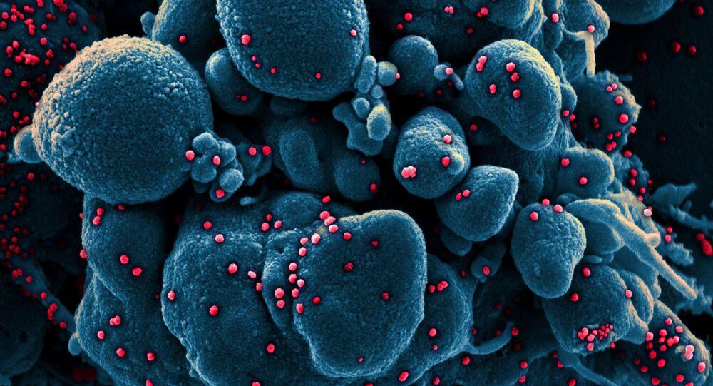 Komórka zarażona koronawirusem pod mikroskopem