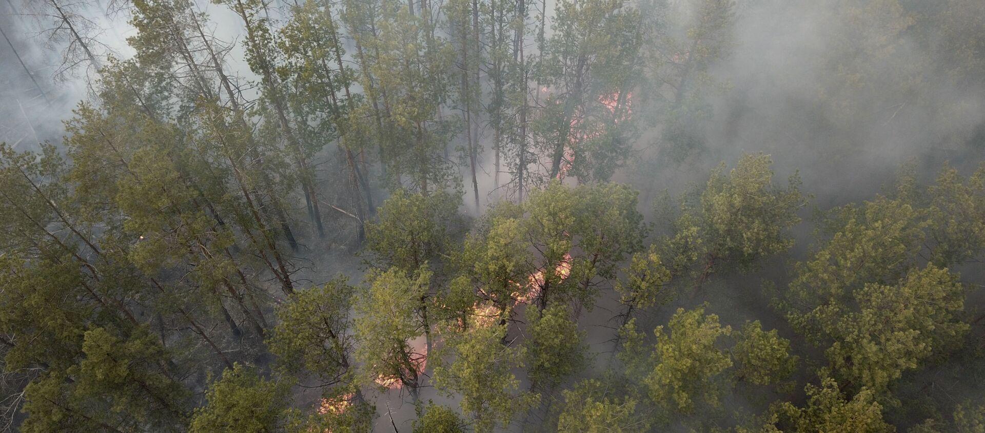 Pożar w Strefie Wykluczenia w Czarnobylu - Sputnik Polska, 1920, 23.03.2021