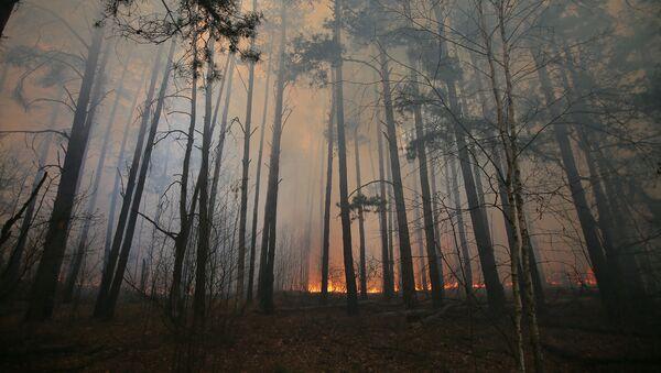Pożar lasu - Sputnik Polska