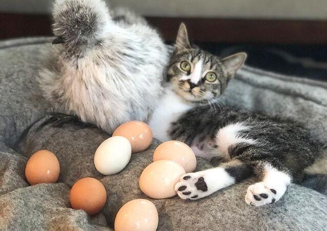 Kociak o imieniu Kaczka