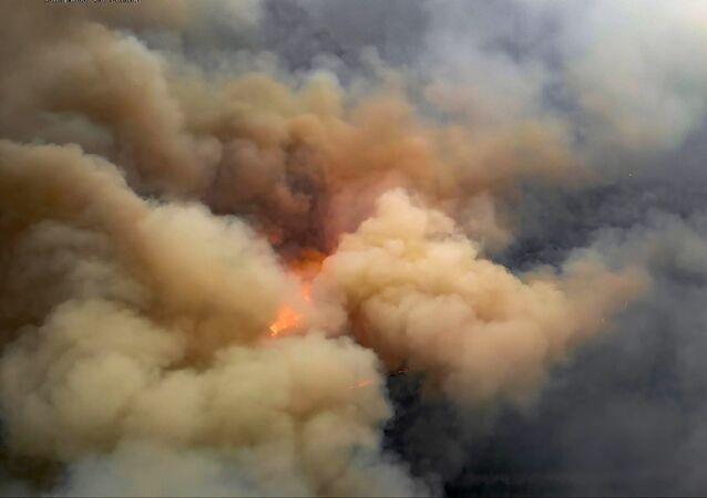 Pożar lasu w strefie czarnobylskiej