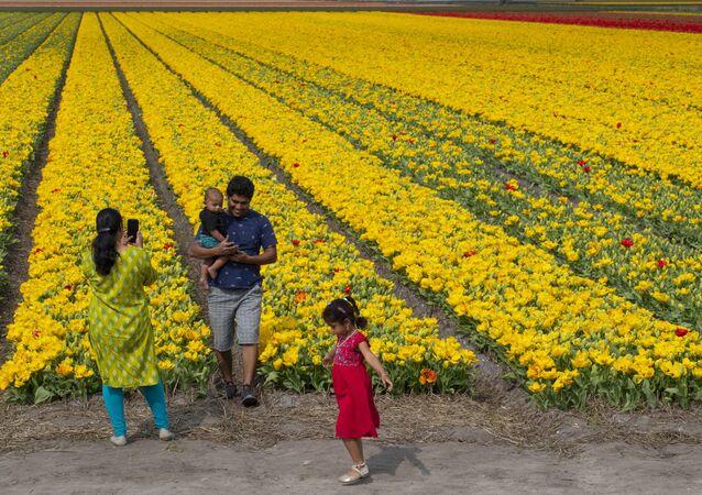 Rodzina robi zdjęcia na tle pola tulipanów w Lisse w Holandii