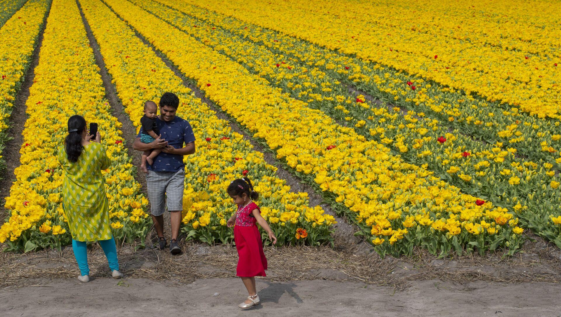 Rodzina robi zdjęcia na tle pola tulipanów w Lisse w Holandii - Sputnik Polska, 1920, 10.03.2021