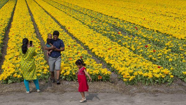 Rodzina robi zdjęcia na tle pola tulipanów w Lisse w Holandii - Sputnik Polska