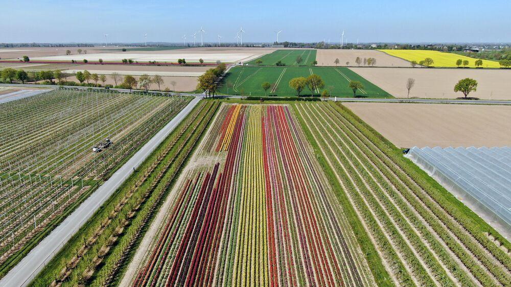 Tulipany w Niemczech