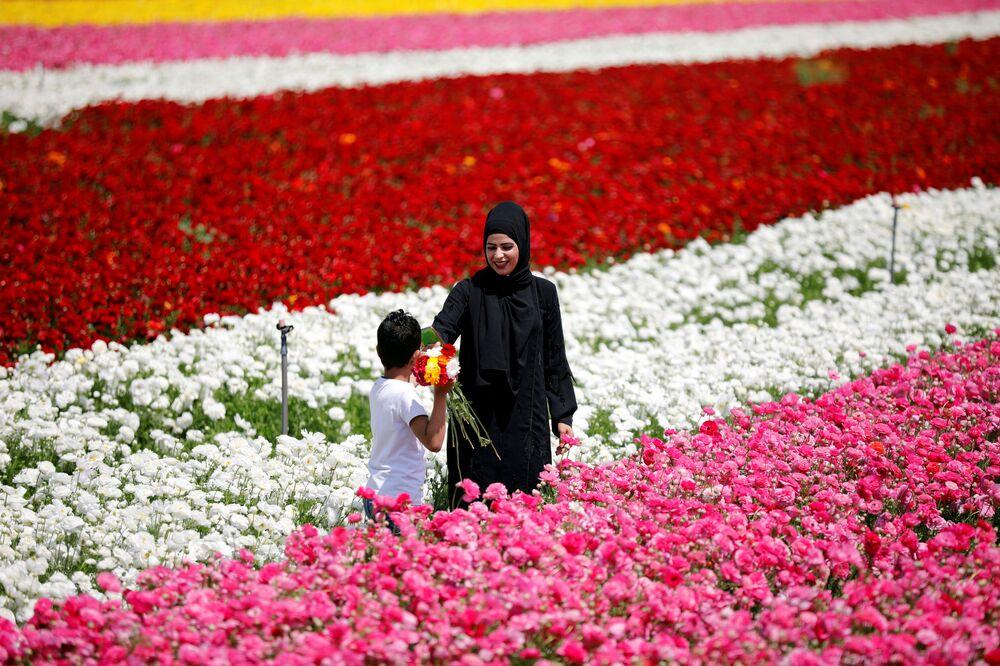 Kwitnące pola w Izraelu
