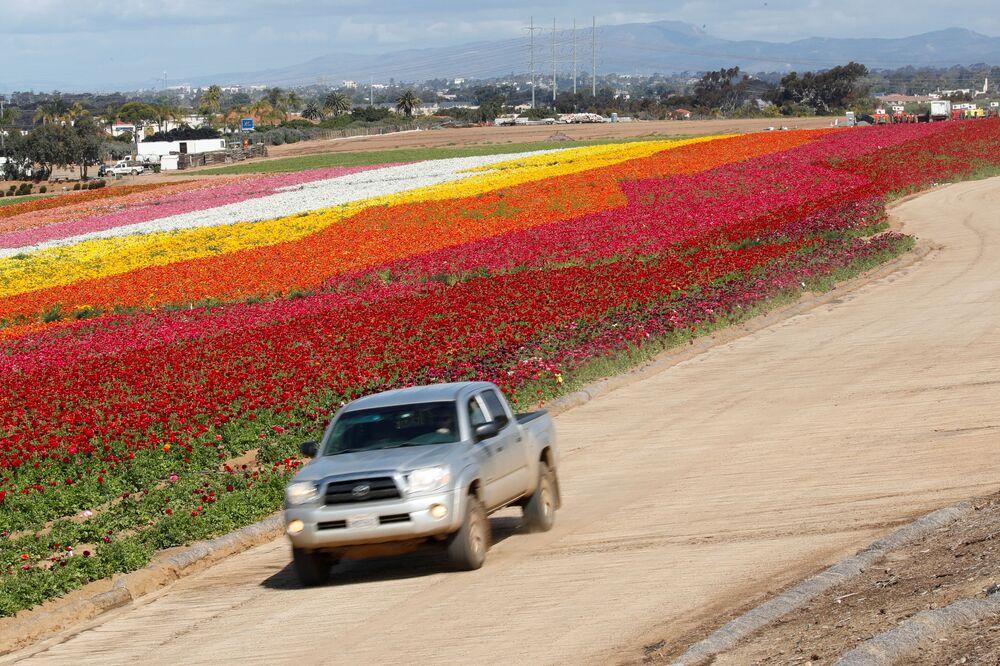 Kwitnące pola w Kalifornii